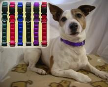 Magnetic Dog collar - Zac